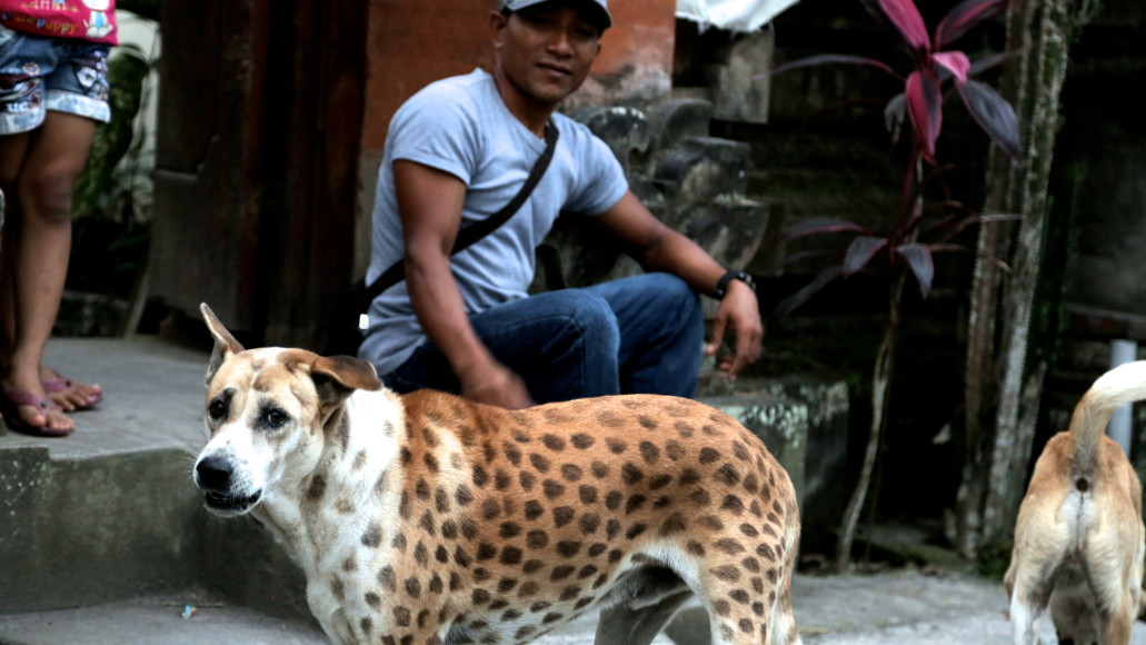 The leopard dog